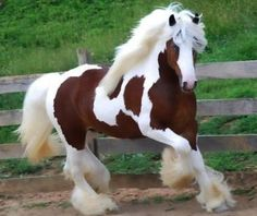 Clydesdale Horse looks like one of my horses