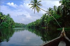 lush green backwaters
