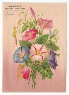 Morning Glory illustrated trade card, Webster's Boot and Shoe Store, Lynn   4782
