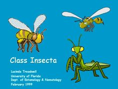 Class Insecta - Wooooooooo! Insect Orders, Web Design Packages, University Of Florida, Hosting Company, Best Web, Bugs, Insects, Beetles