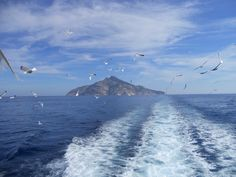 Isola di Montecristo (Toscana)