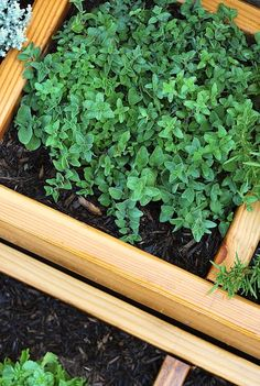Nice herb photos (raised beds) - scroll down