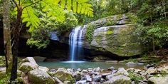 Buderim: With the quiet babble of the creek and calls of the native birds, it's little wonder that this tranquil, sub-tropical spot has been dubbed Serenity Falls. Swimming Holes, Maternity Photography, Day Trips, Serenity, Paths, Places To Go, Waterfall, Tropical, Quorn
