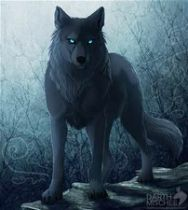 My type of wolf is a black wolf with blue eyes and needs my pack and hates to be alone and my position is beta