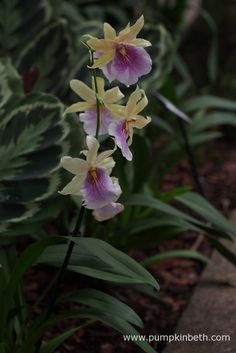 Behind the Scenes at the Kew Orchid Extravaganza 2017 - Pumpkin Beth Botanical Gardens, The Good Place, Behind The Scenes, Pumpkin, Amazing, Flowers, Plants, Beautiful, Color