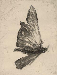 Moth-cellany-6