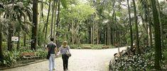 Parque Trianon. Foto: Caio Pimenta/SPTuris.