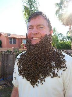 die besten 25 wasp removal ideen auf pinterest wespenabwehrmittel honig bienen entfernung. Black Bedroom Furniture Sets. Home Design Ideas