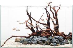 Gorgeous Driftwood Hardscape Design. Get driftwood for your aquarium here: www.susquehannadriftwood.com