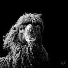 Захватывающие черно-белые портреты животных