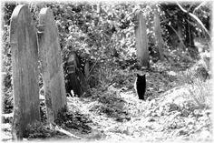 Black Cat In Cemetery - Cemeteries & Graveyards Photo (26397860 ...