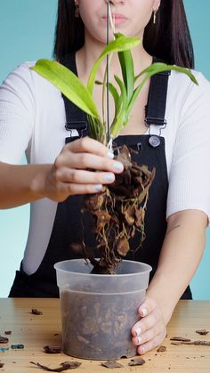 Your orchids do have a remedy! Rescue them with these effective hacks