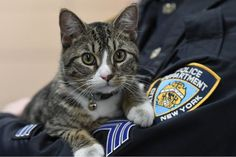 The deputy inspector agreed to adopt Martin, but only under one condition.