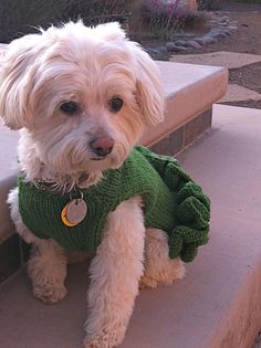 Ravelry: Project Gallery for Little Black Dress With Pearls Dog Sweater pattern by My Savannah Cottage