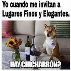 http://www.thenofacts.com/2016/11/07/este-lindo-perrito-quedo-atrapado-entre-una-palma-y-los-maestros-del-photoshop-lo-trollean-al-maximo/ #memesmamones