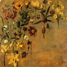 """Study of Flowers"" by Albrecht Dürer Painter, Printmaker & Theorist of the German Renaissance . Art And Illustration, Illustrations, Albrecht Durer, Renaissance Kunst, Principles Of Art, Mellow Yellow, Gravure, Botanical Art, Love Art"
