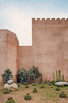 Lost In Time In Taroudant, small town at the foothills of the Atlas Mountains in Morocco / cactus garden