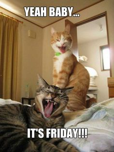 """55 """"Almost Friday"""" Memes - """"Yeah baby...It's Friday!!!"""" Happy Friday Meme, Friday Cat, Funny Friday Memes, Its Friday Quotes, Friday Humor, Funny Cat Memes, Funny Cats, Funny Animals, Funny Humor"""