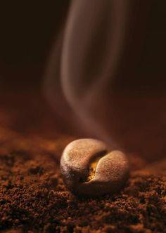22 Amazing Coffee Bean And Tea Leaf Tea Bags Coffee Beans Medium Roast Fair Trade I Love Coffee, Coffee Break, My Coffee, Coffee Pics, Coffee Aroma, Coffee Images, Coffee Pictures, Coffee Cafe, Coffee Drinks