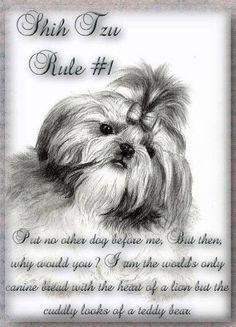 Shih Tzu rule