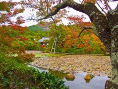 Kyoto, Ryoan-ji, Landschaftsgarten