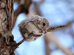 Cute winter animal