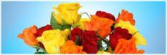 Blumenversand günstig und preiswert