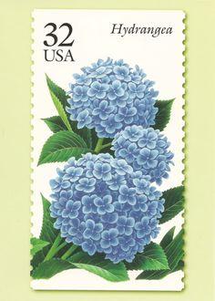 32 Cent Hydrangea Stamp Postcard photo by mariquita225 | Photobucket