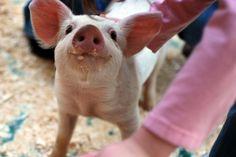 atos de carinho entre animais - Pesquisa Google