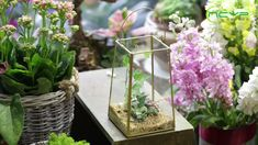 geometric  terrariums Terrarium Containers, Terrarium Ideas, Glass Terrarium, Terrariums, Small Potted Plants, Air Plants, Plant Holders, Container Gardening, Flower Pots