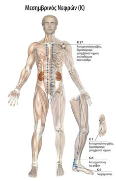 Drawing Poses Male, Eft Tapping, Body Therapy, Acupuncture, Art Sketches, Kai, Anatomy, Health Fitness, Healthy
