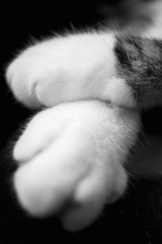 A different angle - Gatos - Katzen I Love Cats, Cute Cats, Funny Cats, Crazy Cat Lady, Crazy Cats, Cat Paws, Dog Cat, Paws And Claws, Cat Photography