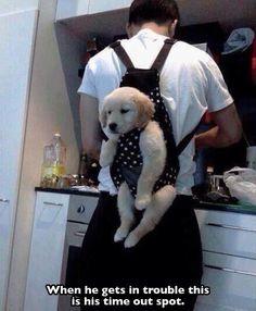 Ooo perrito...