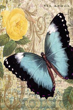 Butterfly Digital Art - Butterfly Kisses-a by Jean Plout