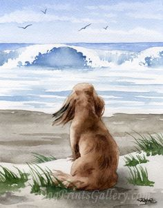 Long Haired Dachshund Art Print Long Haired Dachshund At The Beach Signed by Artist D J Rogers About the Artwork: This is a professional open edition Long Haired Dachshund art print from an original watercolor painting. Long Haired Dachshund art print is hand signed on the front by