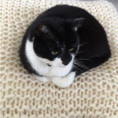 Prrr..prrr..prrr..! Kattenkussen breien | draad en praat... | Bloglovin'