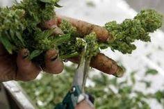 """Résultat de recherche d'images pour """"cannabis and law"""""""