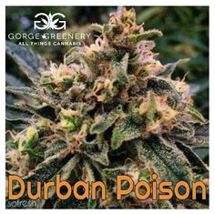 8 Best Sales and Specials! images in 2016 | Cannabis, Oregon, Greenery