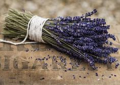 An alkaline and especially chalky soil will enhance lavenders fragrance.