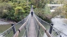Swingbrigde Upper Hutt New Zealand. Kaitoke Park.