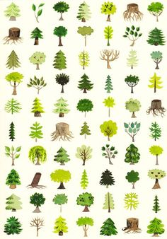 Great exercise for writers.... When you said tree, what kind of tree were you thinking of?  So many options.