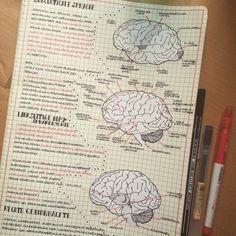 Cornell Mind Map Method