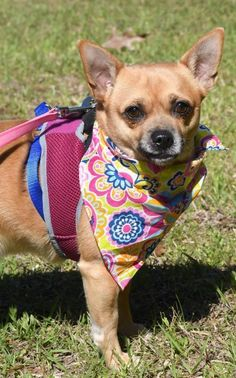 Adopt Atticus 19 On Pets Needing Home In Mississippi Animal
