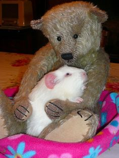 Fairy and Pasquale bear (2)