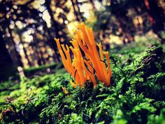 One with nature [3]  _ _ _ _ _ #grafinesse #picturesque #nature #one #gegenlicht #naturelovers #naturpur #forest #bwood #schwammerljagd #stillalive #herbst #atumn #potd