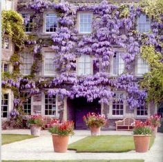 Wisteria, Hanham Court near Bristol in south-west England - Landscape design by Julian and Isabel Bannerman Modern Landscape Design, Modern Landscaping, Garden Landscaping, Landscape Architecture, Beautiful Gardens, Beautiful Flowers, Beautiful Places, Wisteria, Love Is Sweet