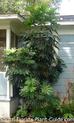 370 best plants for south florida images on pinterest south