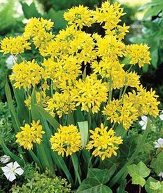 28 Best Perennials for a Cutting Flower Garden - Finding Sea Turtles Tall Flowers, Growing Flowers, Cut Flowers, Planting Flowers, Yellow Flowers, Spring Flowers, Best Perennials, Flowers Perennials, Deer Resistant Flowers