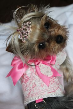 yorkie designer cuts with knot - Google Search