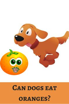 Juicy orange makes everyone mouth water at this summer. Shall we share some with our dogs? http://dogbabe.com/can-dogs-eat-oranges